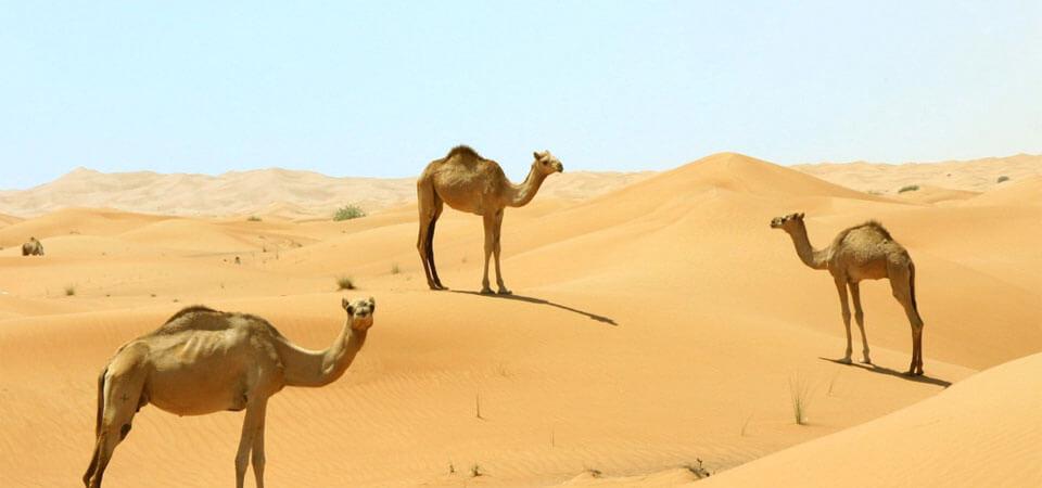 Visit The Desert