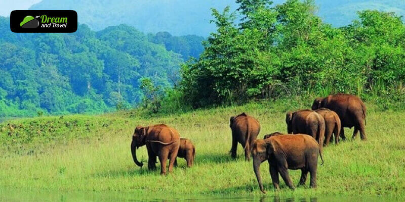 The best time to visit Koyna Wildlife Sanctuary